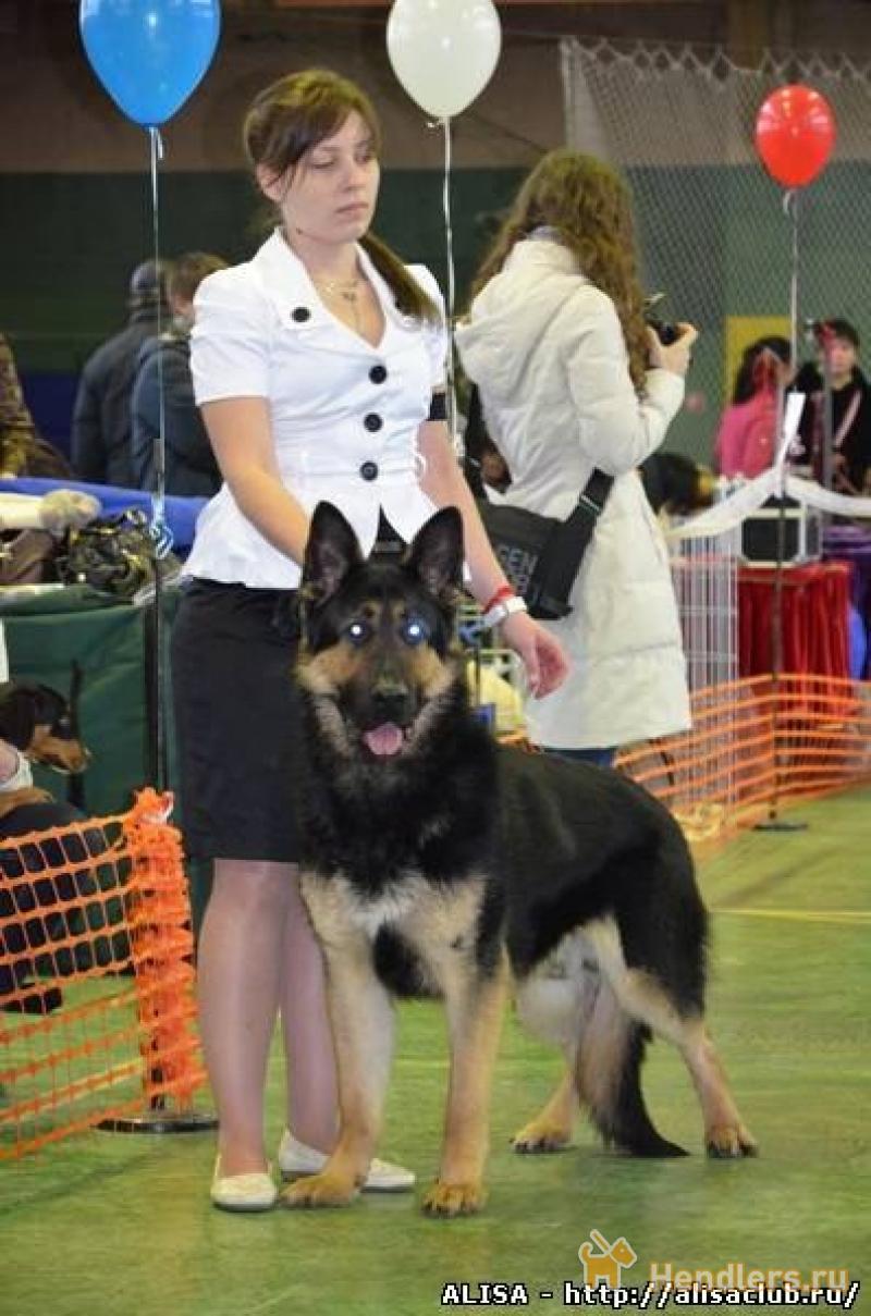 фабрика хендлер митино обучение собак участие иных лиц