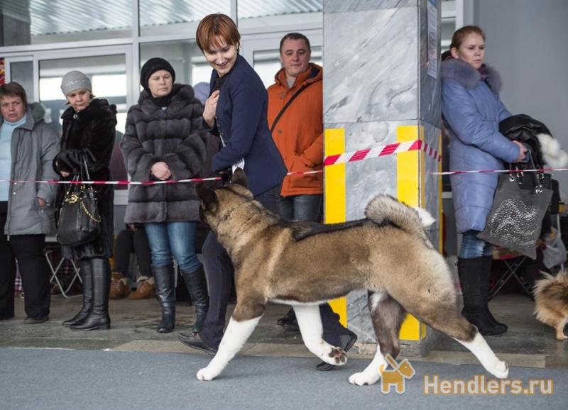 Нана хендлер митино обучение собак Исаакий считается четвертым